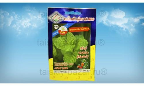 Пряные тайские травы: лимонная мята