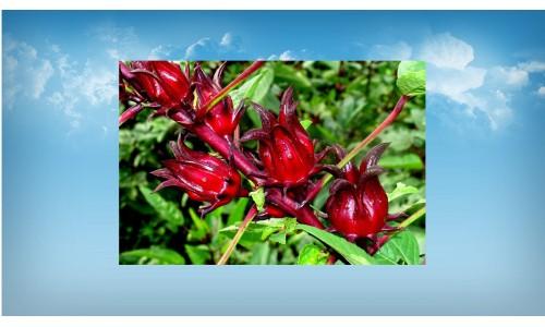Цветочный чай Розелия 100 грамм